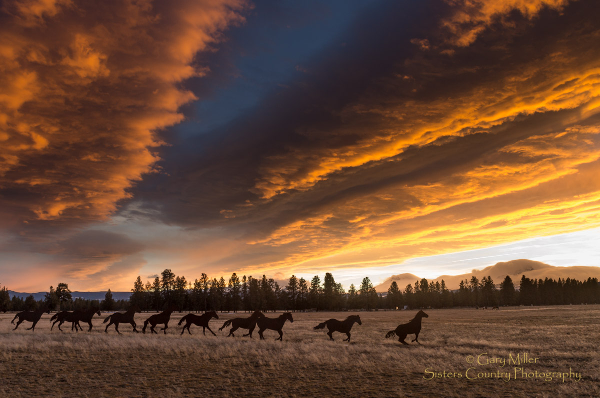 Brian Bain - Horse Sculpture Hwy 20 Photo by Gary Miller